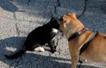 ¿Pueden perros y gatos recibir una dieta vegana?